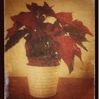miniatura imagen vintage con snapseed