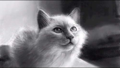 Dibujando un Gato en iPad usando Bloc de Dibujo por Kyle Lambert
